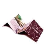печать открыток и буклетов в типографии